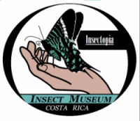 Insectopia Insect Museum