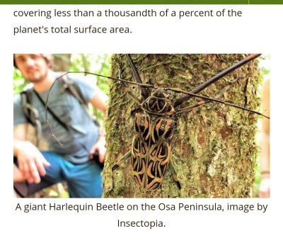 Nicuesa Lodge and Insectopia Join in Preserving Costa Rica Insects
