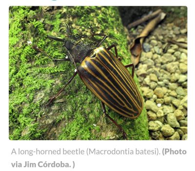It's a bug's life: Protecting Costa Rica's buggy biodiversity
